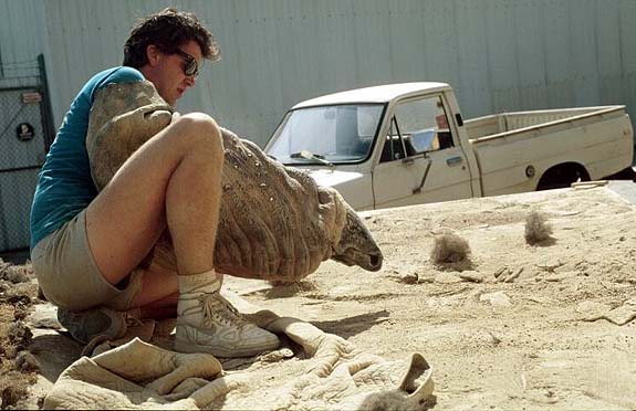 Graboid Hand Puppet On Set