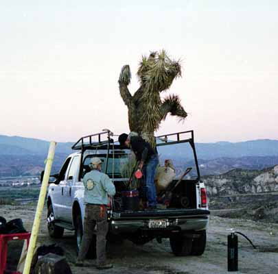 Joshua Tree On Truck